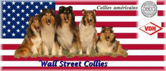 www.friesen-collies-nrw.de